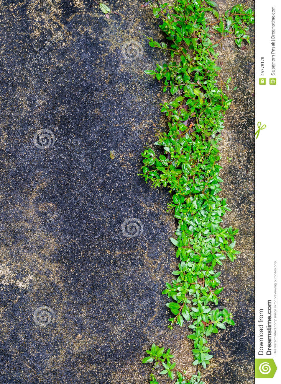 Abstract green design on concrete stock photography for Green floor plant