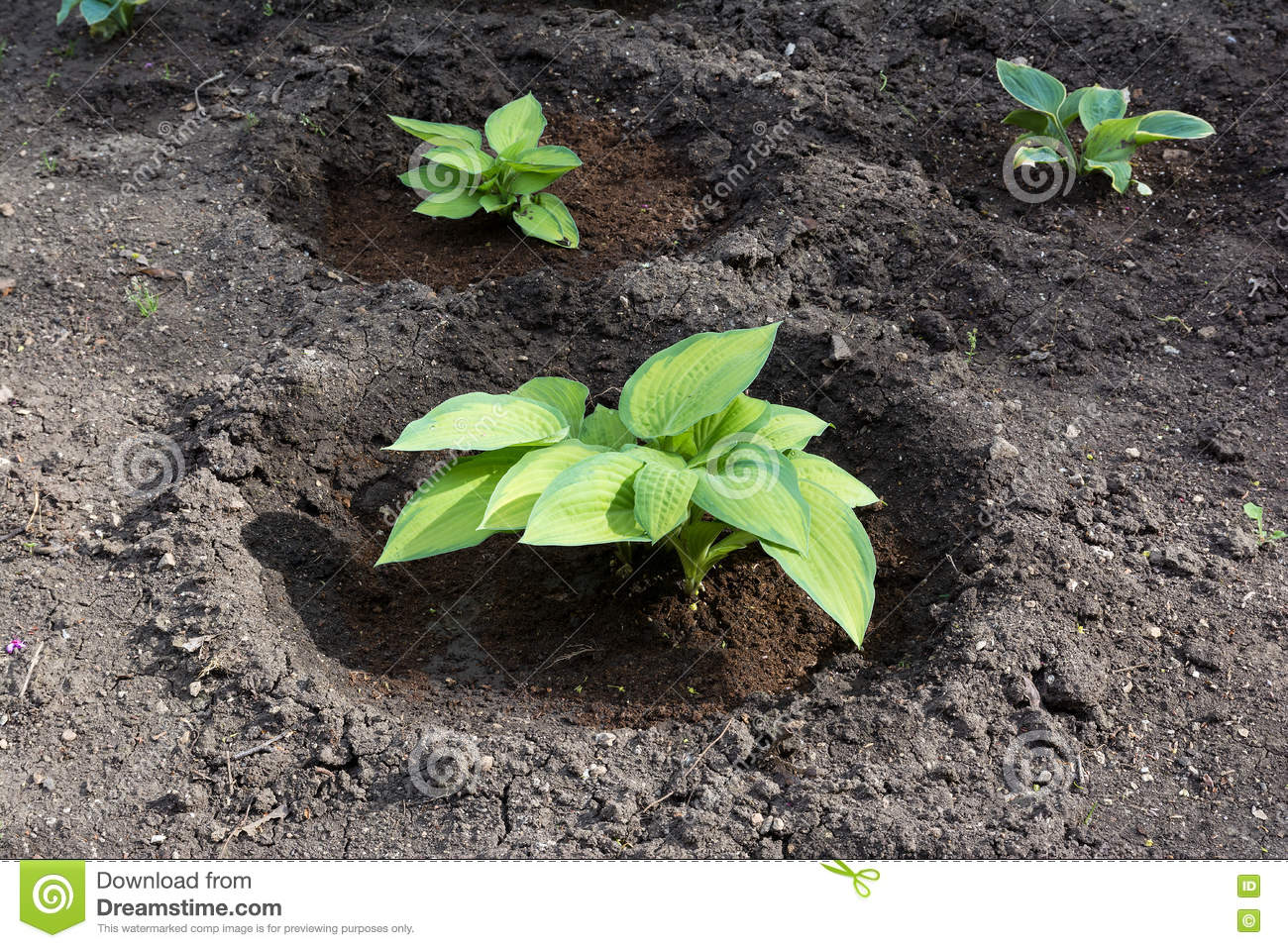 Green plant growing from soil stock photo image 72802195 for Soil and green