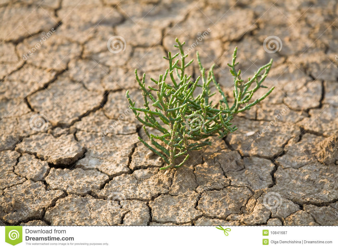 Green plant growing trough soil royalty free stock for Soil and green