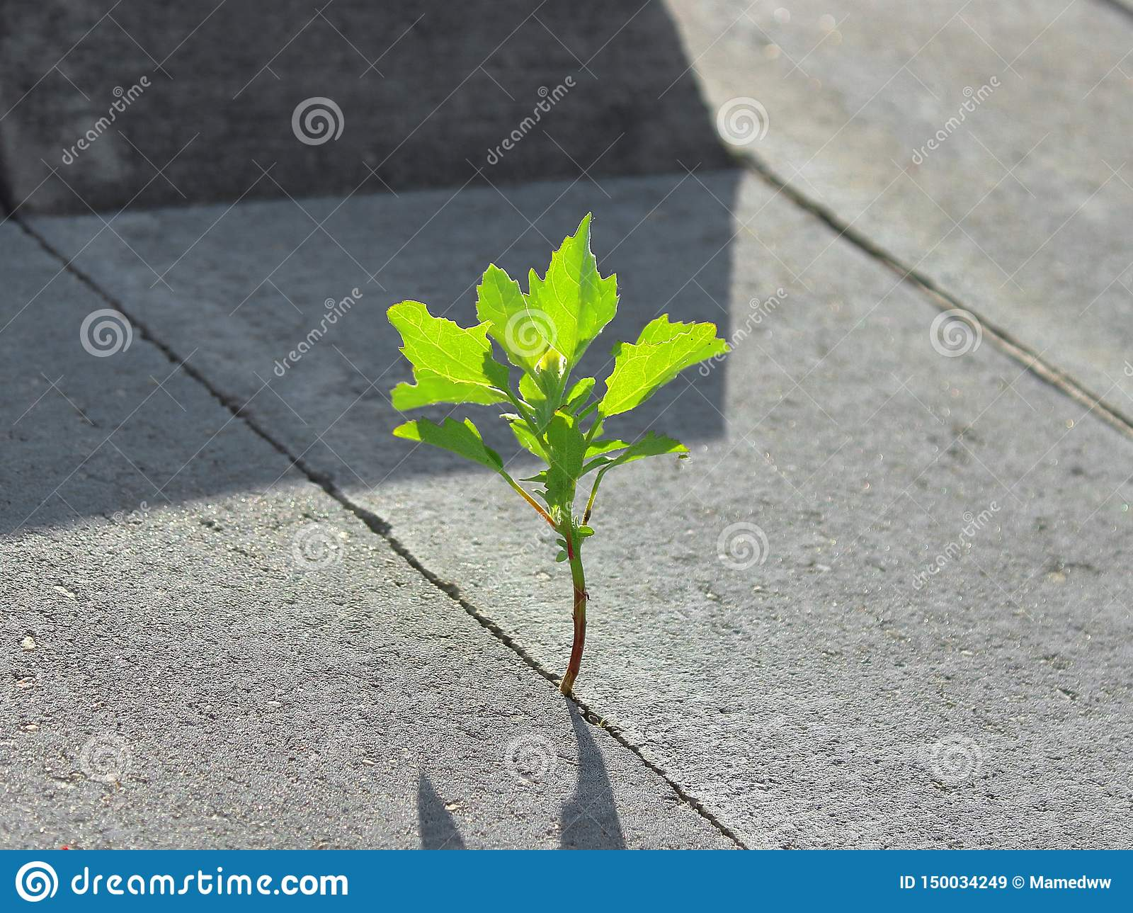 A green plant has broken through concrete