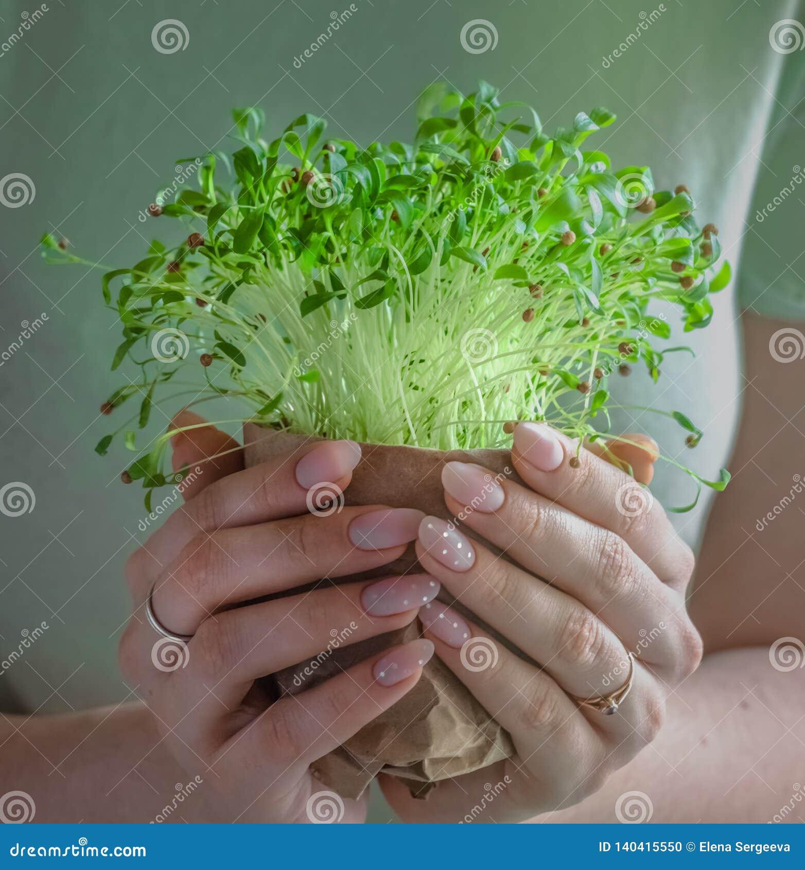 Green plant new spouts eco