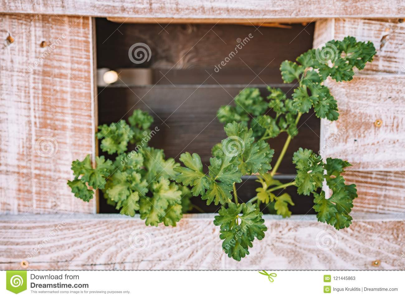 Green Plant In Pot On A Shelf On White Pallet Wall Stock Image Image Of Decoration Object 121445863