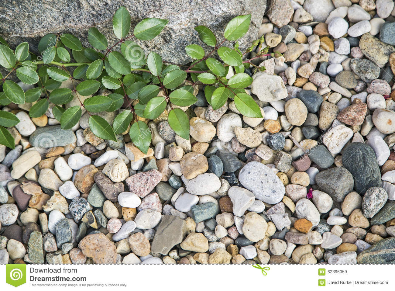 Green Plant Stones Pebbles Background Stock Image - Image of rocks ...