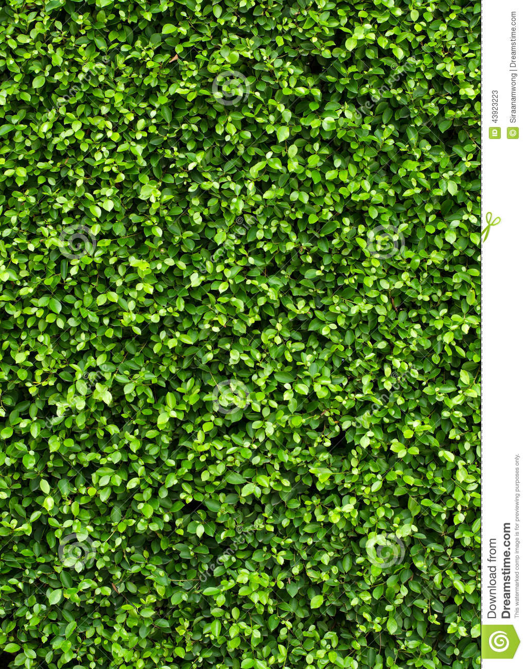 Leaf Wall Decoration Funny Images Gallery