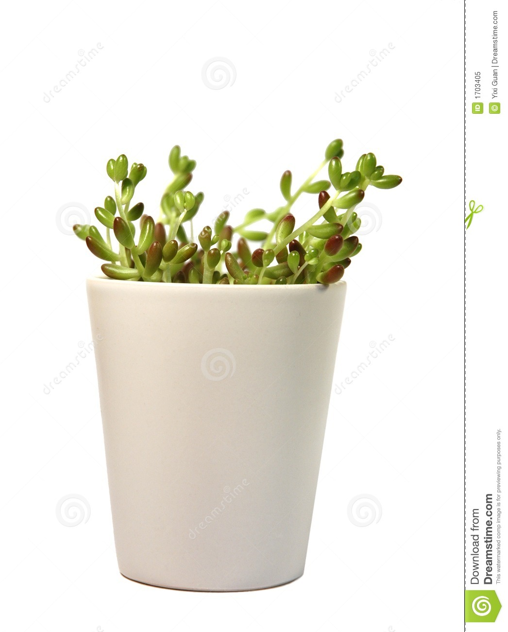 Green Plant In White Flowerpot Royalty Free Stock Photo