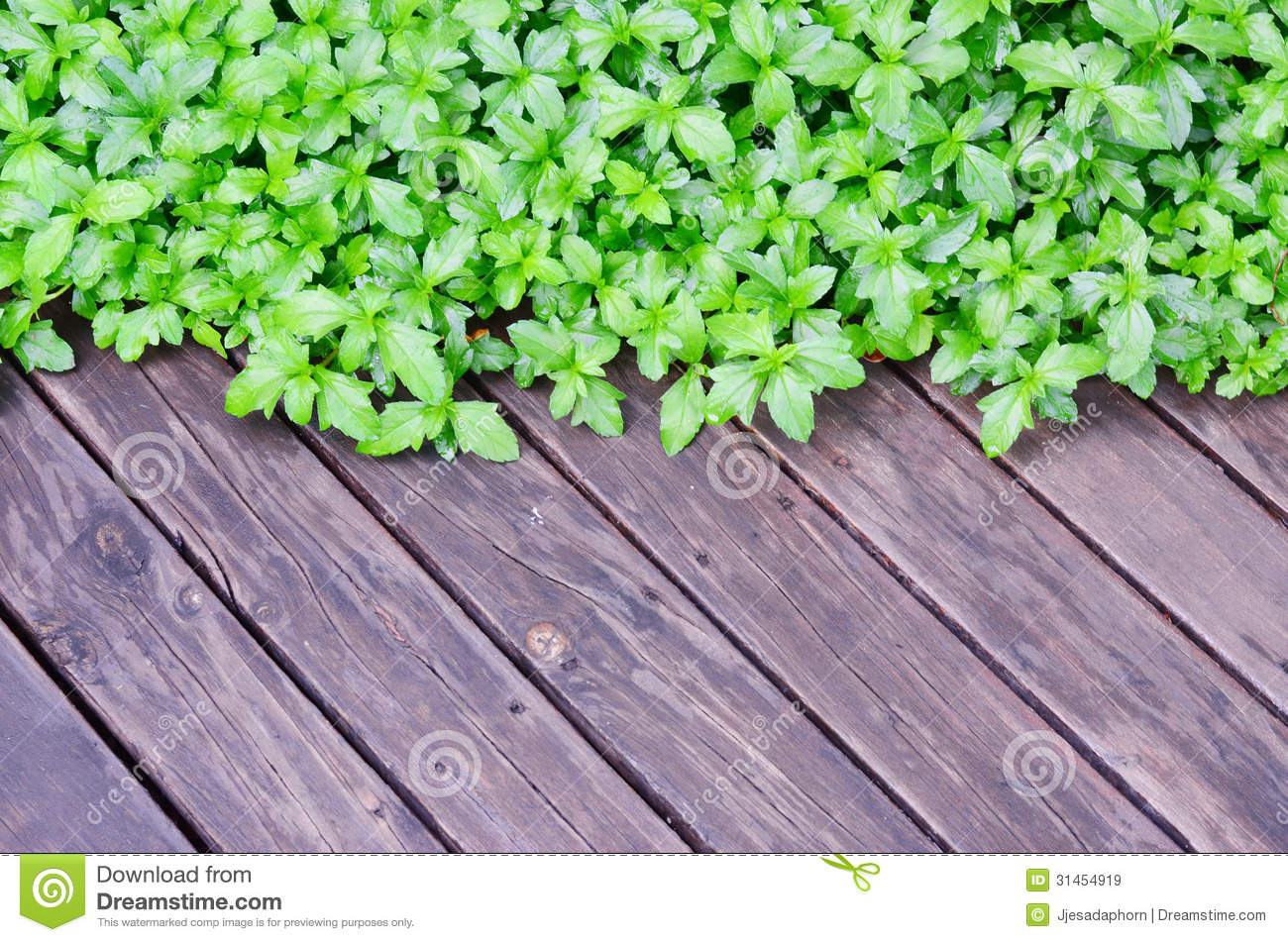 Green Plant On Wood Floor Royalty Free Stock Images