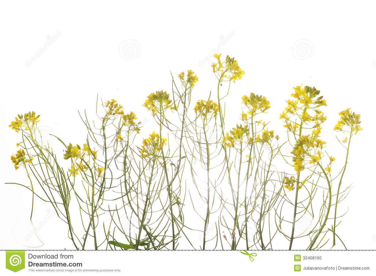 Green plant with yellow flowers stock photo image of indoors royalty free stock photo mightylinksfo Gallery