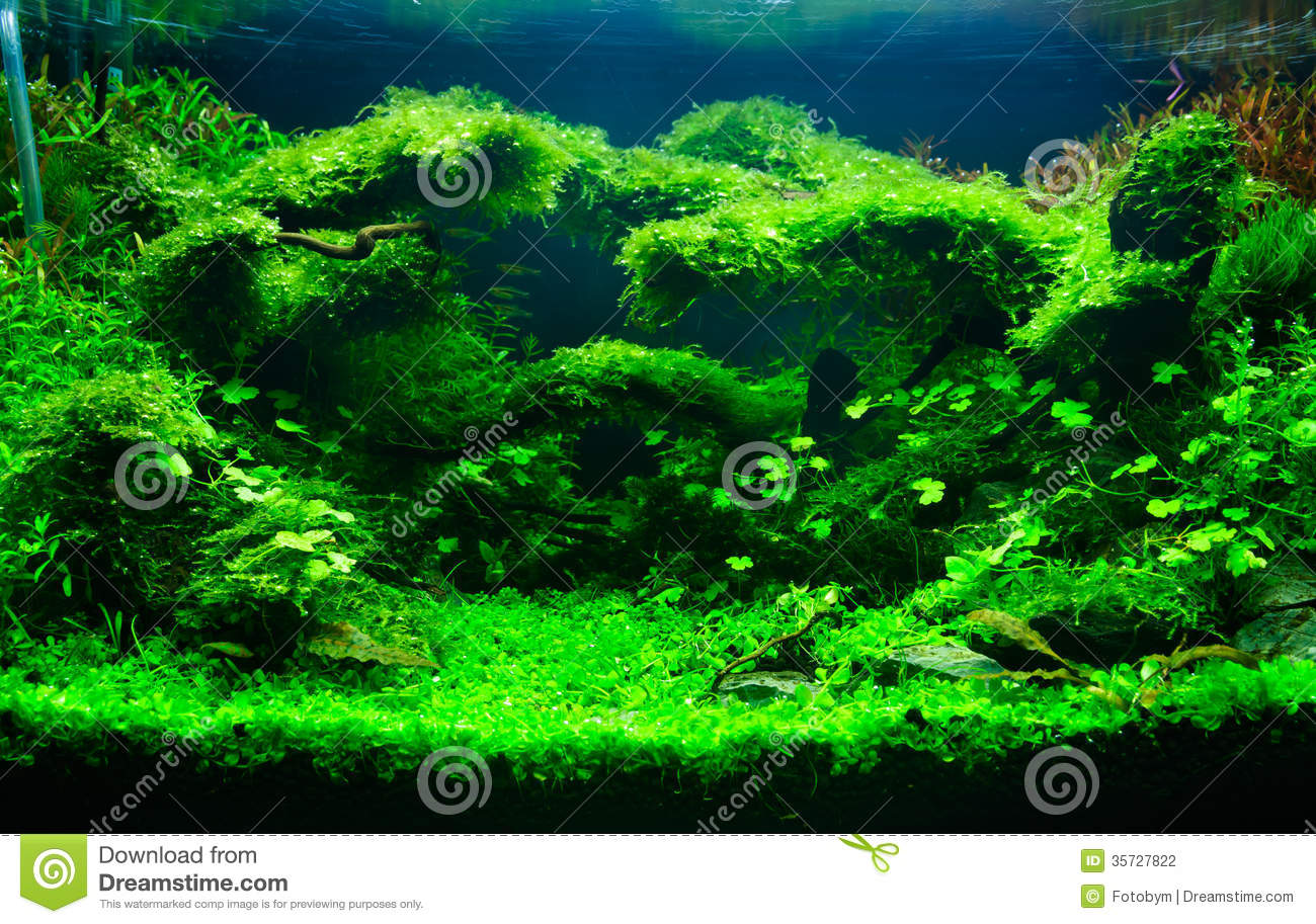 A Green Planted Aquarium Stock Photography Image 35727822