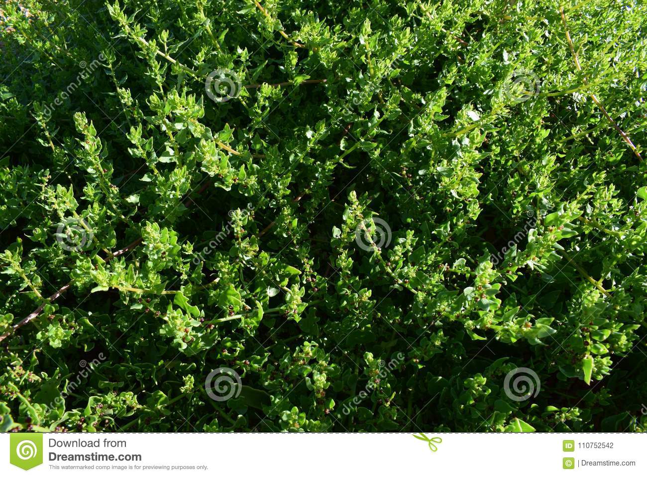 Green plants background texture