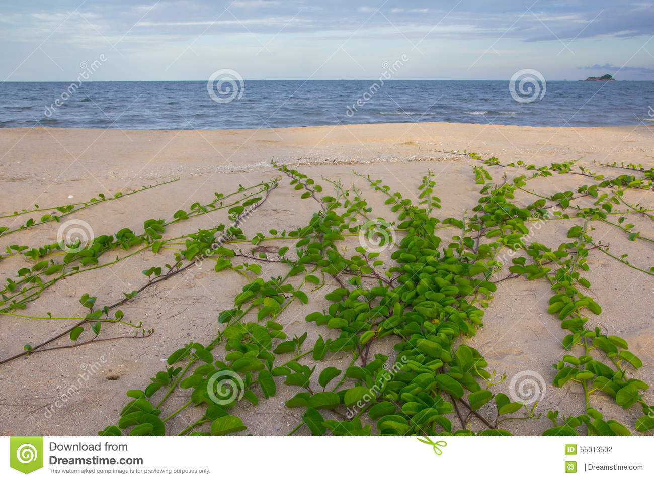 Green plants in the Beach