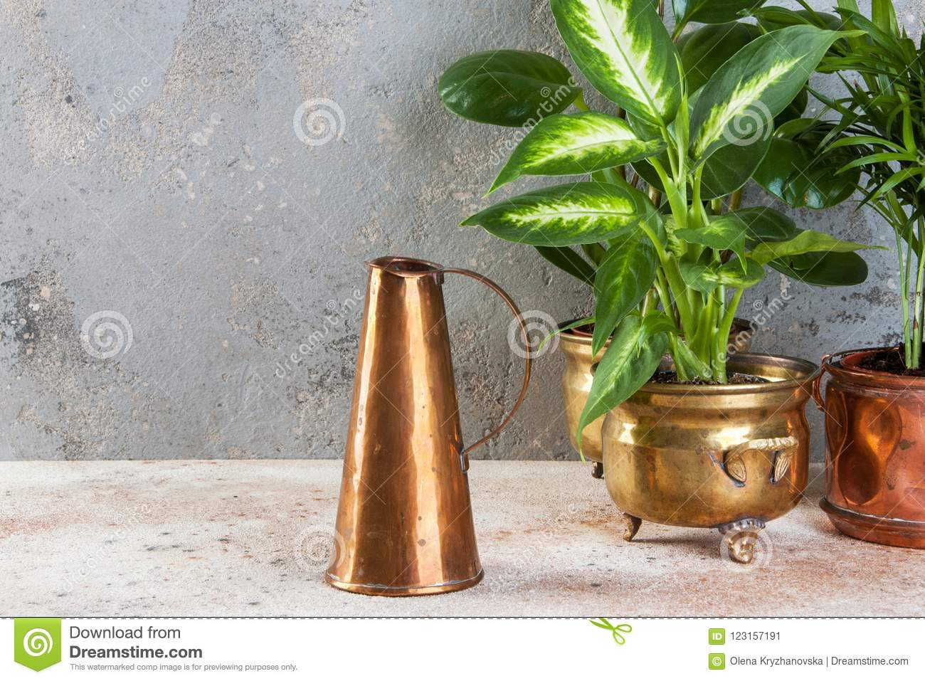 Copper jug and green plants in brass and copper vintage flower pots on a concrete background. Copy space for text. & Green Plants In Brass And Copper Flower Pots Stock Image - Image of ...