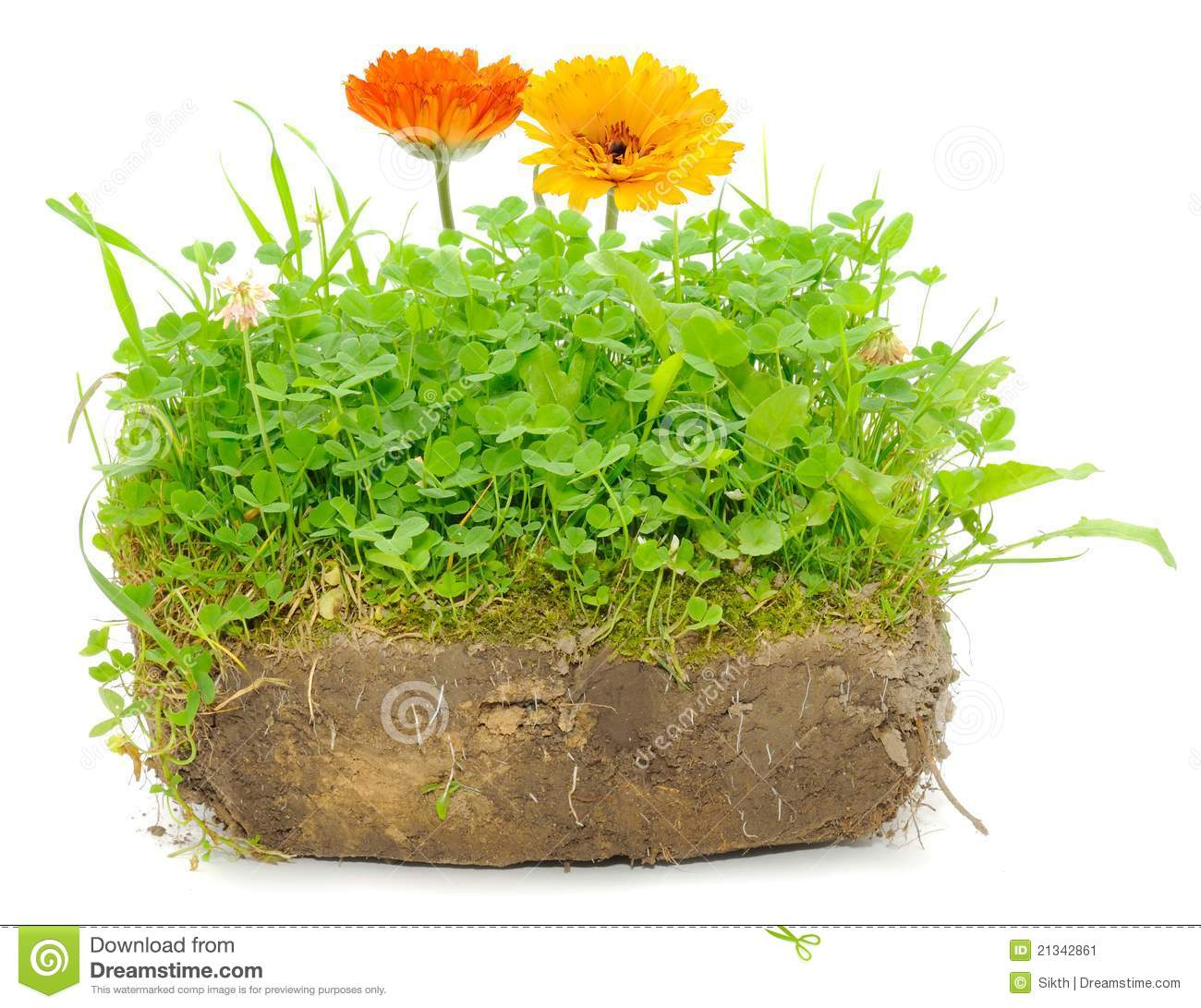 Green plants and calendula flowers in soil stock image for Soil and green
