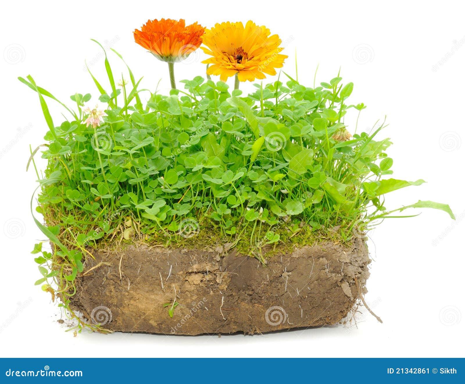 flower soil huntsville