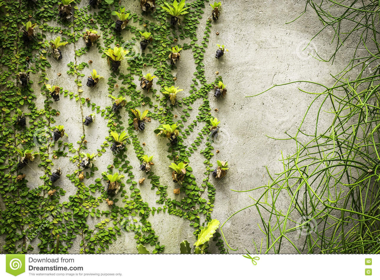 Closed Plants Concrete : Green plants on concrete wall background stock photo