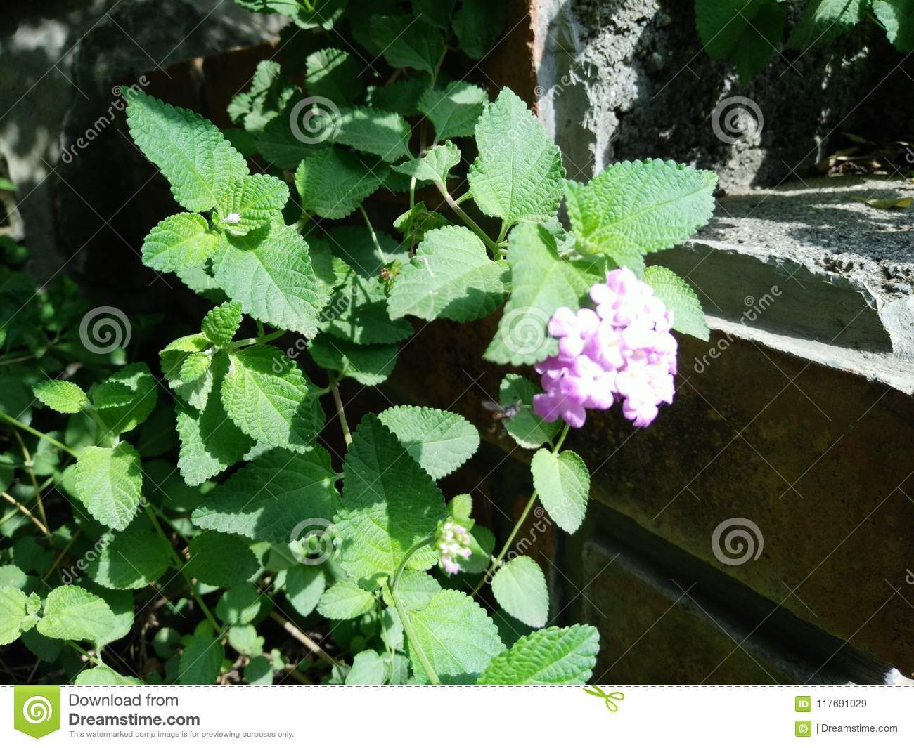 Green Plants In Garden With White Flowers Stock Image Image Of
