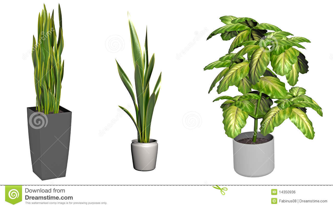 Royalty free stock image green plants in pots image 14350936 - Leafy houseplants ...