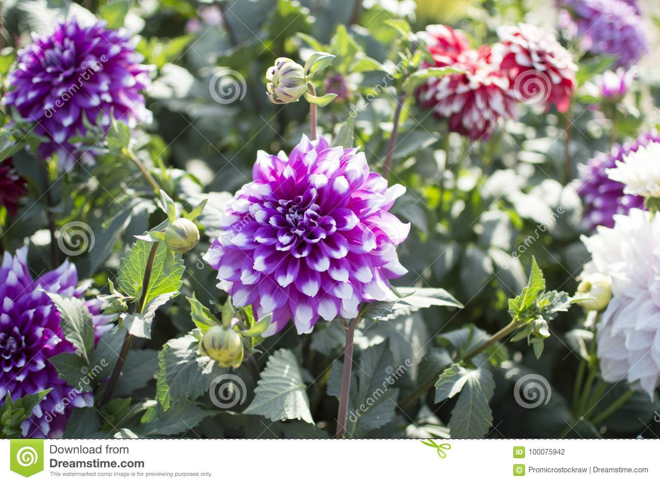 Green Plants With Red And Blue Flowers Stock Photo Image Of Light