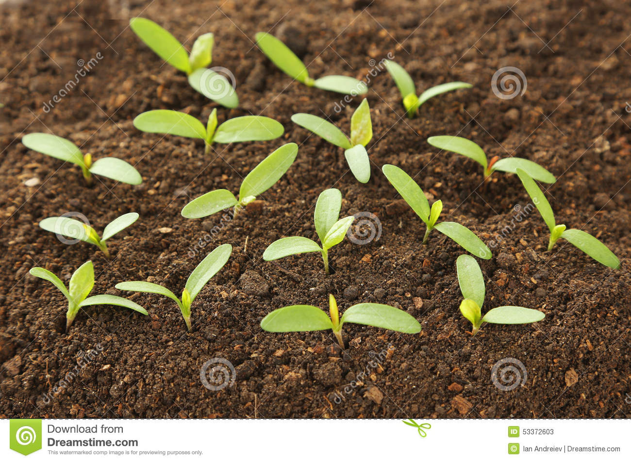 Green plants stock photo image 53372603 for Soil and green