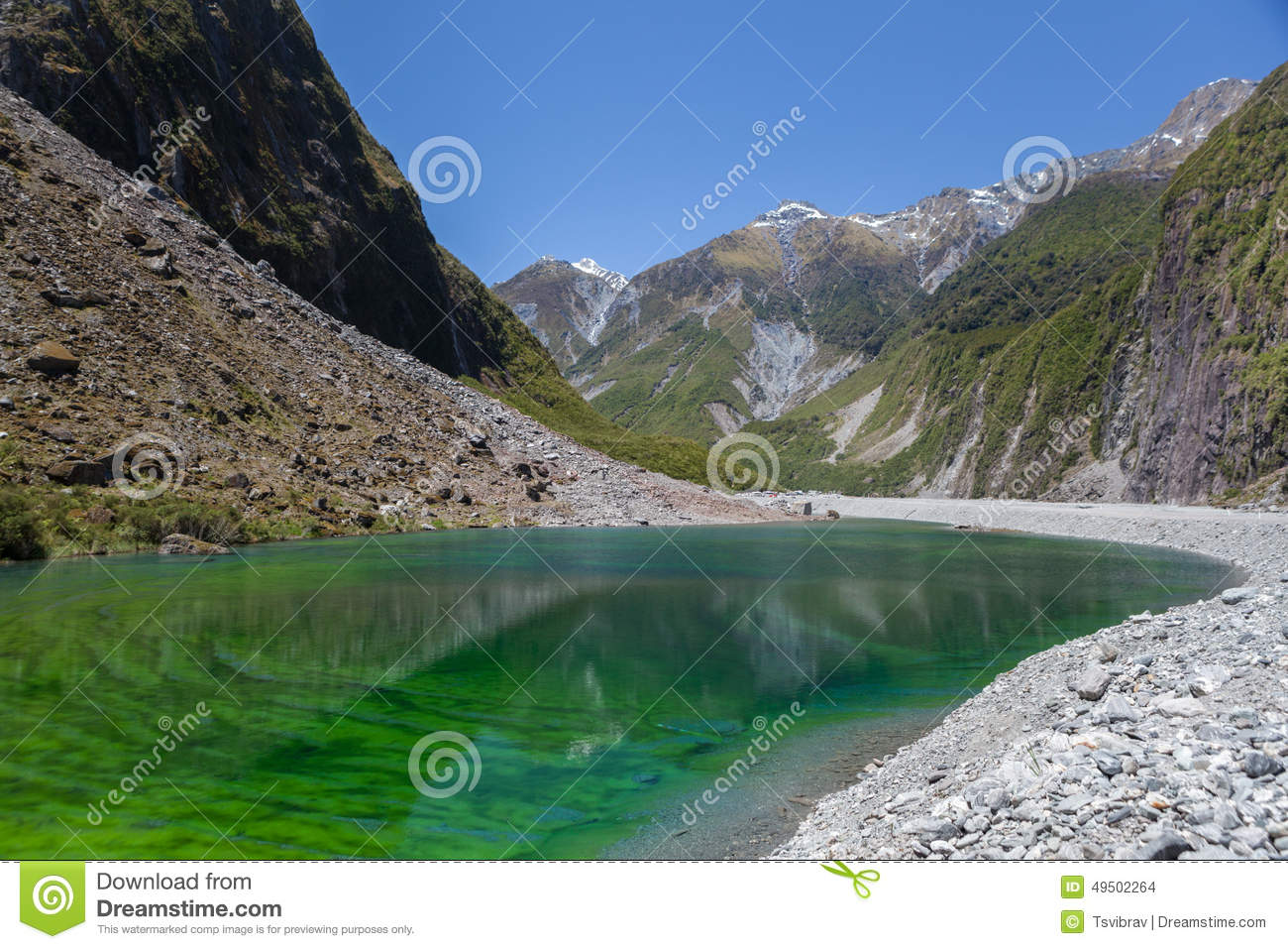 Green pond near fox glacier new zealand stock photo for Green water in pond