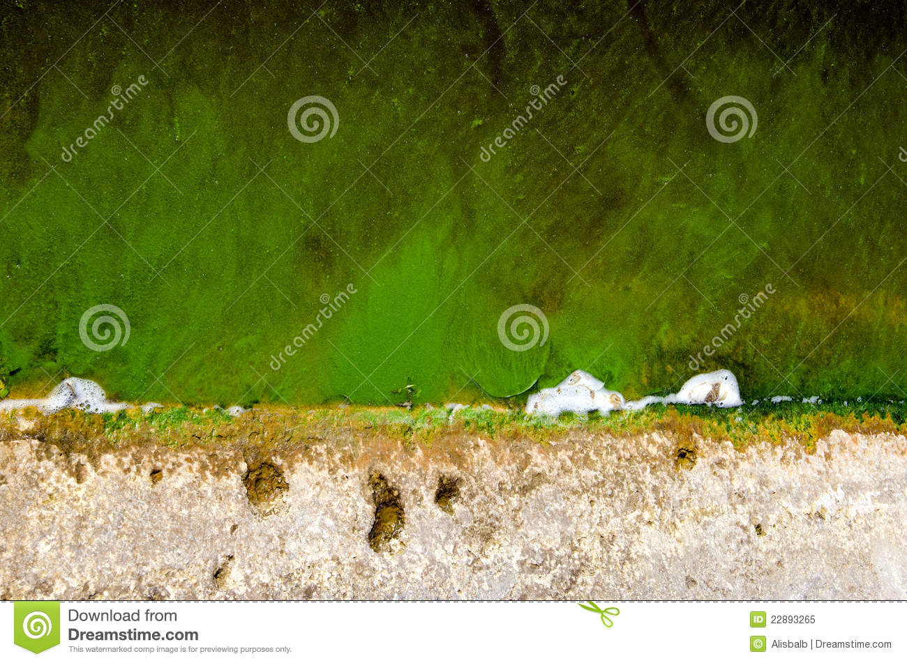 Green pond water with algae background royalty free stock for Green pond water