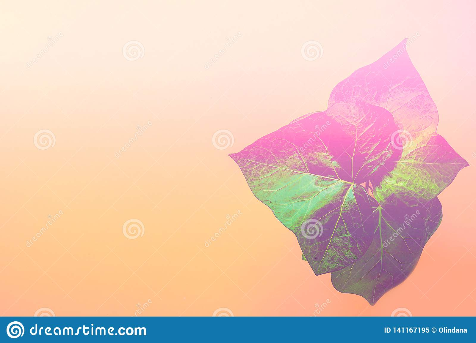 Green potted house room plant on duotone gradient peachy pink yellow background. Purple leaks. Neon colors. Trendy abstract
