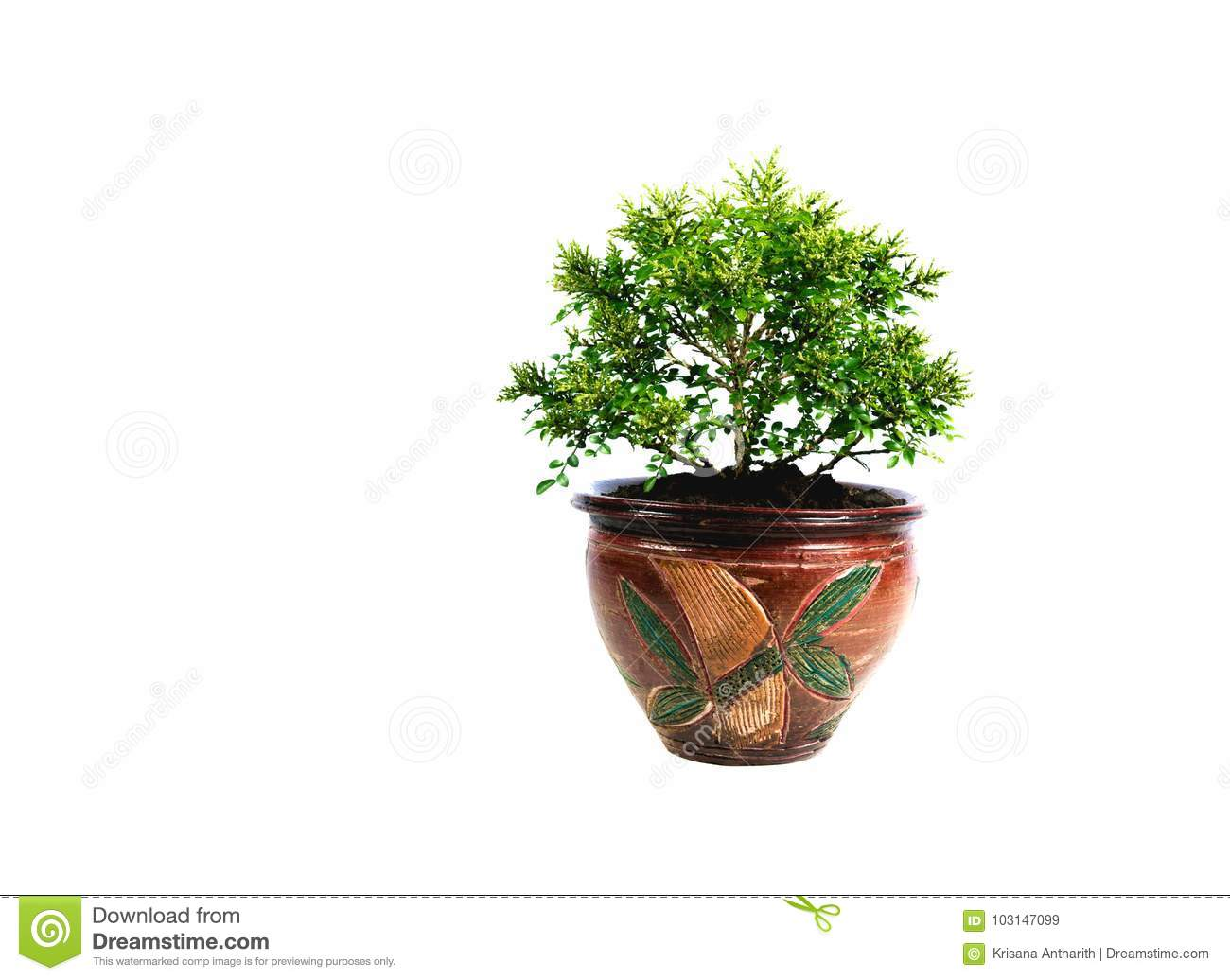 Green potted plant, trees in the pot isolated on white