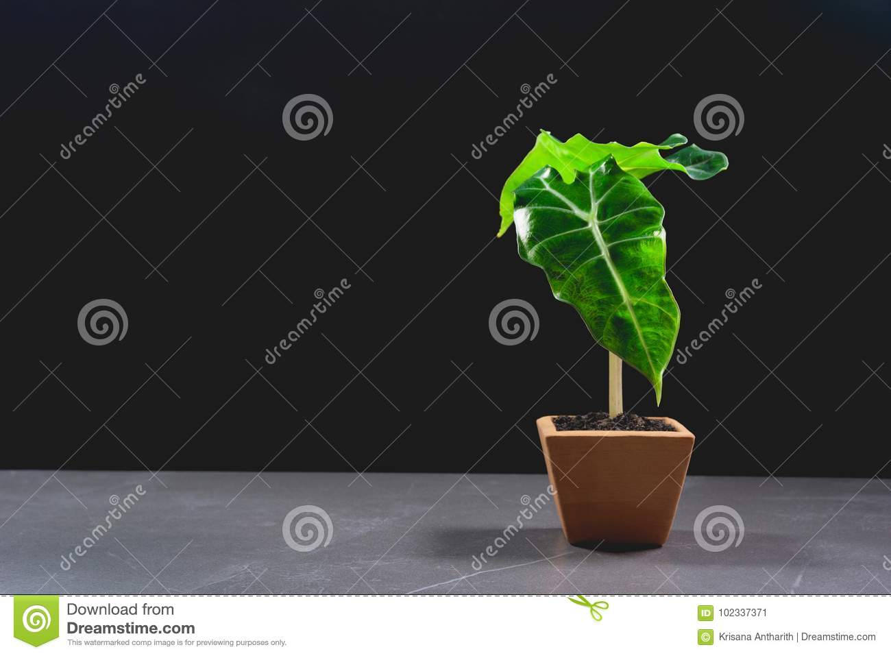Green potted plant, trees in the pot on table
