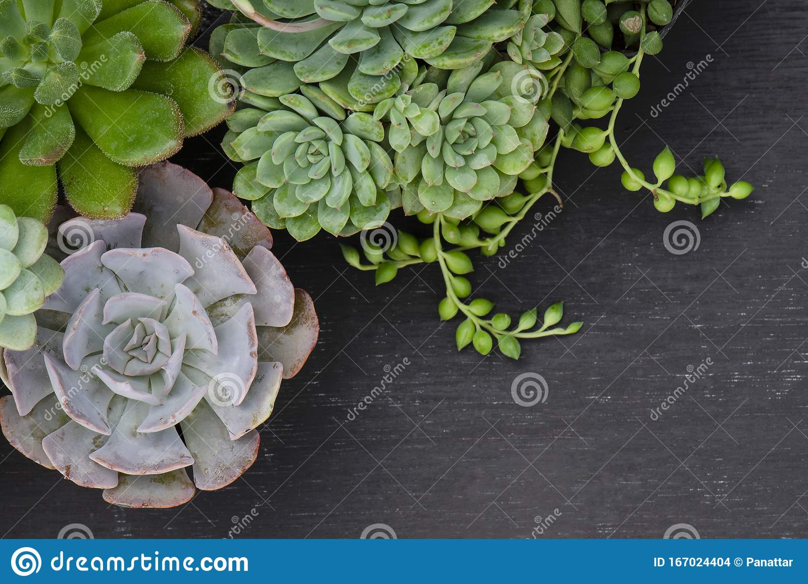 2 809 Succulent Border Photos Free Royalty Free Stock Photos From Dreamstime