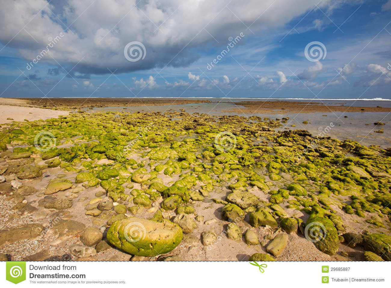 Green reef at low tide