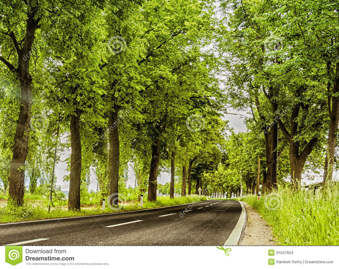 turning Road with green trees on both sides.