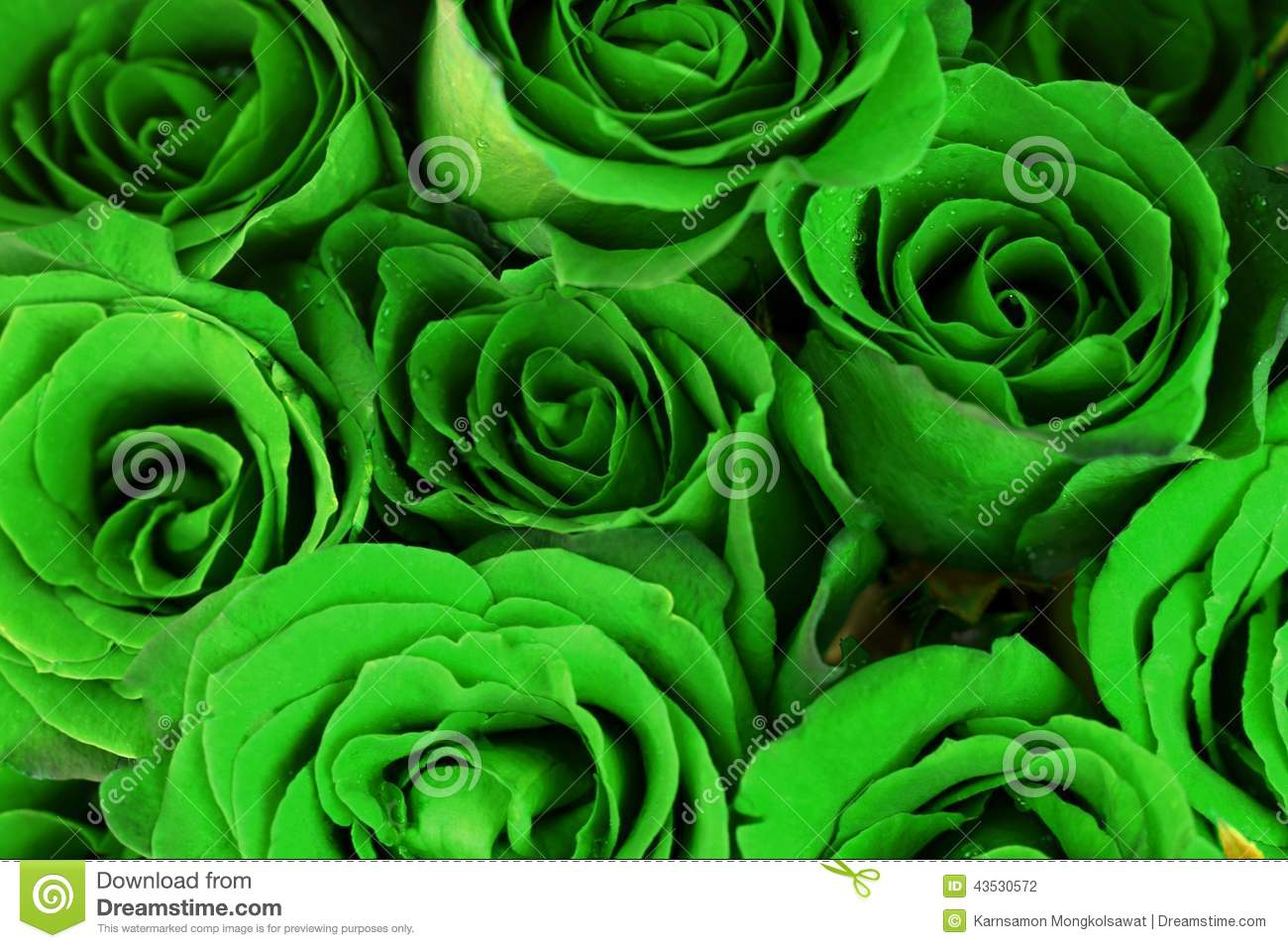 Green Roses Bouquet As Background Stock Photo