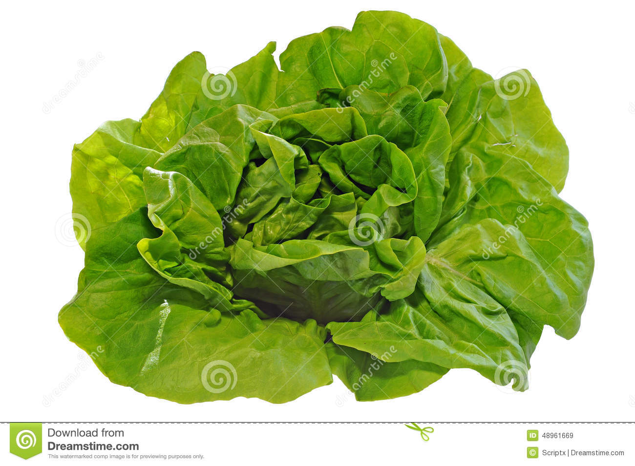 Green salad, isolated on white background