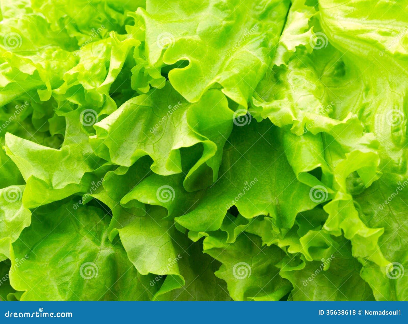 Green leaf lettuce. Close-up photo. Fresh vegetables.
