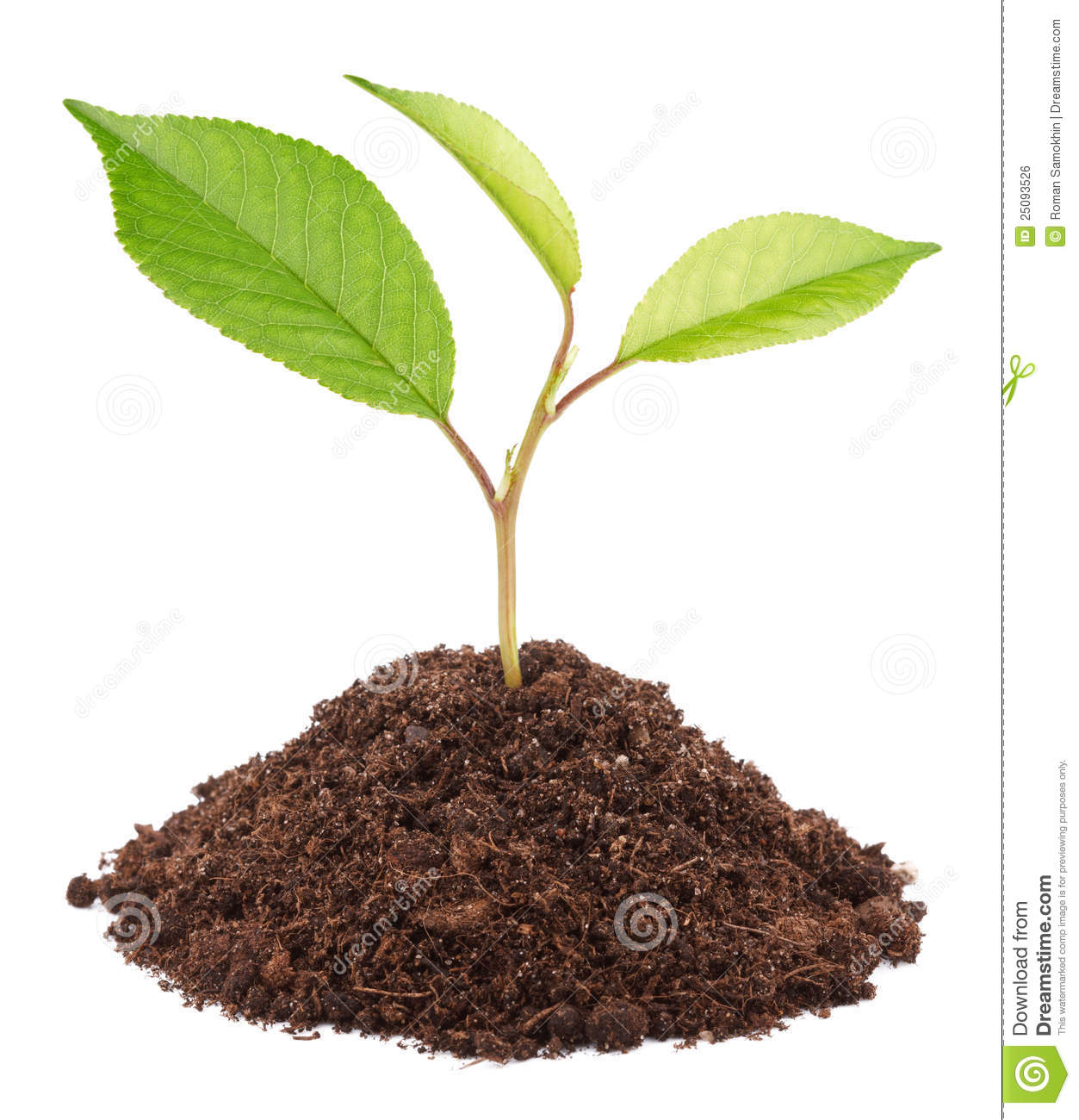 Royalty Free Stock Image Green Sapling Apple Tree Image25093526 on Green Environmental Clip Art