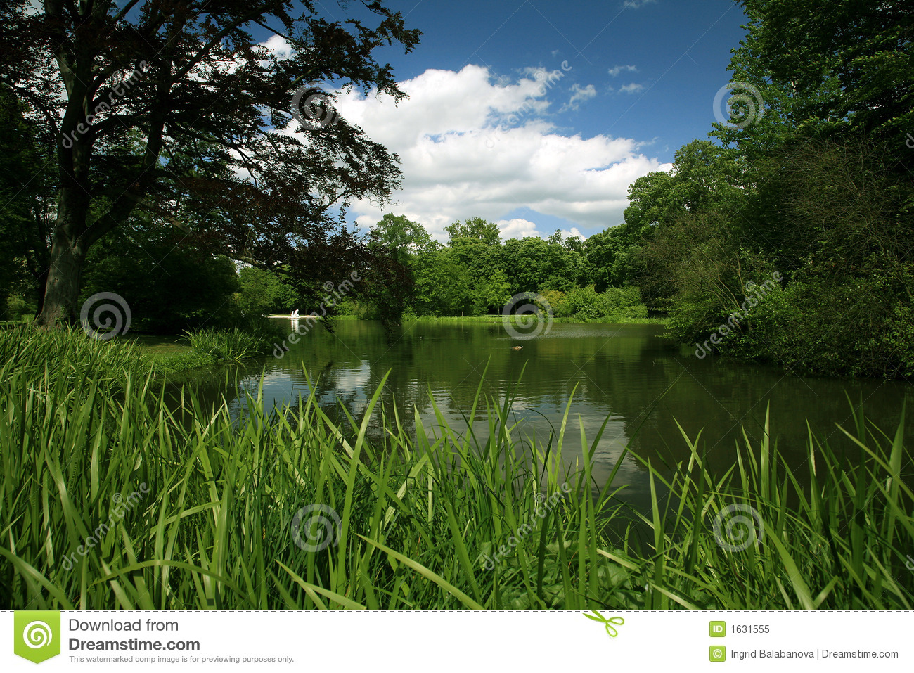 Green scenery royalty free stock photo image 1631555 for Paysage vert