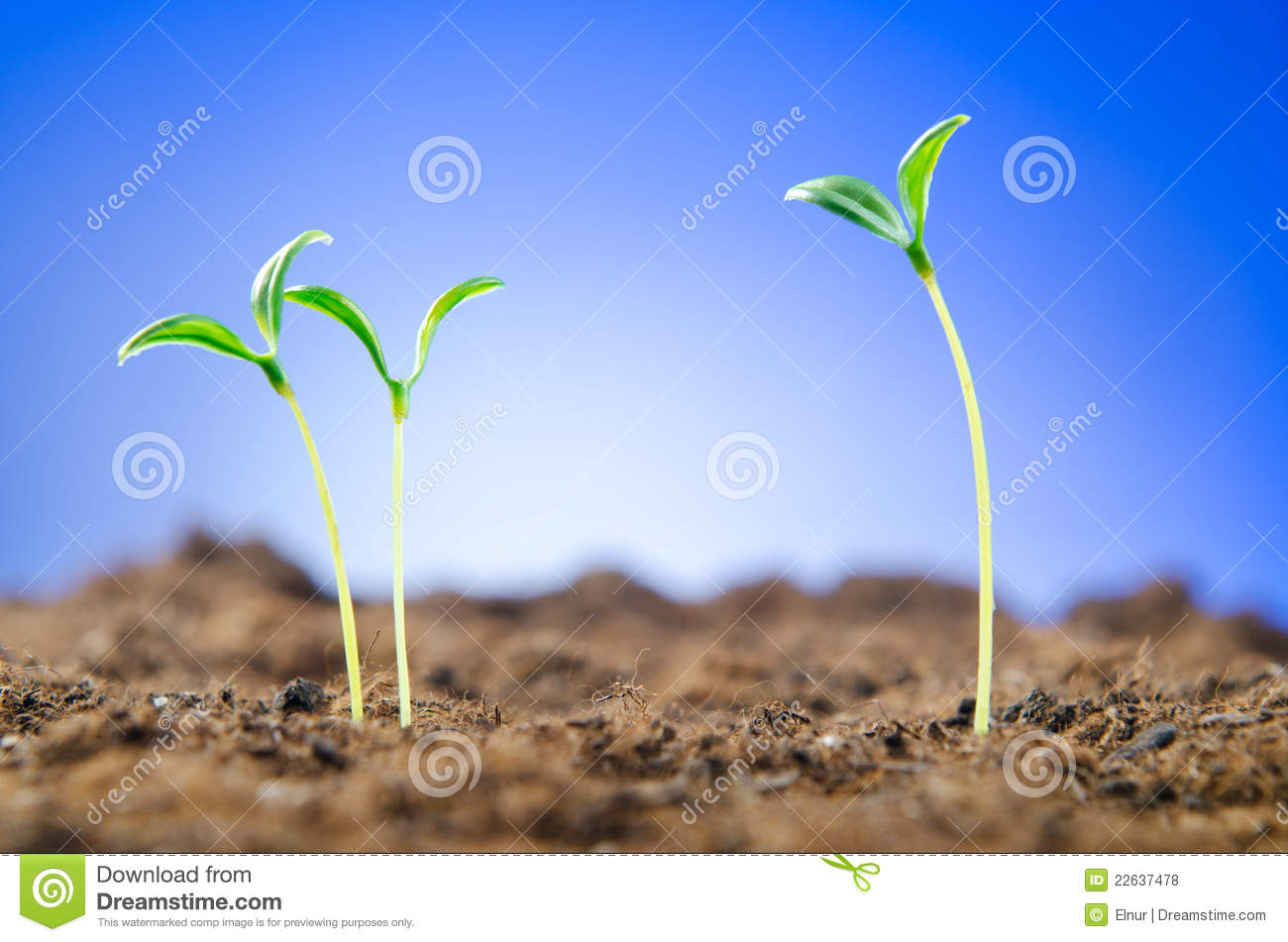 Green seedlings - new life concept