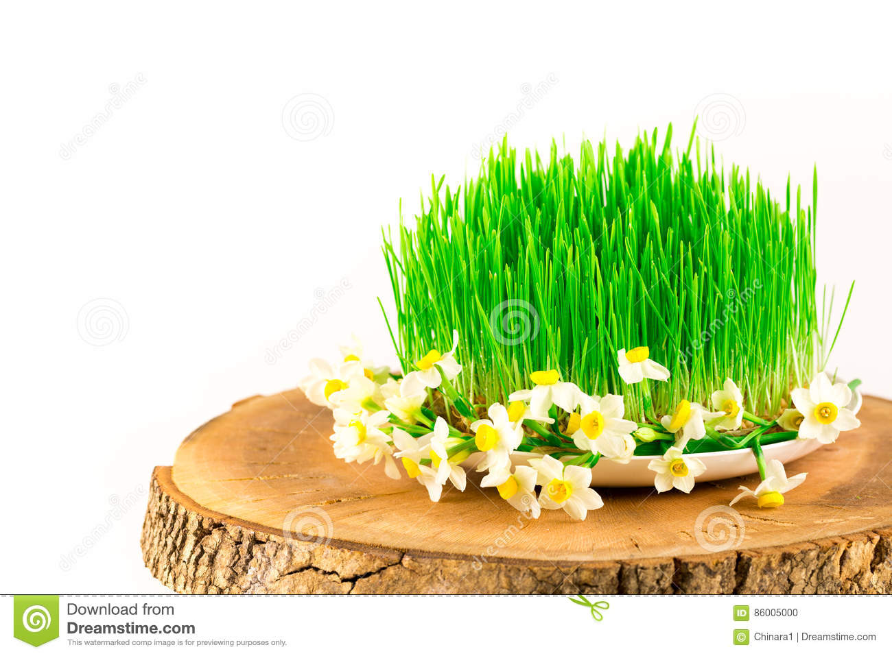 Green semeni on wooden stump, decorated with tiny daffodils