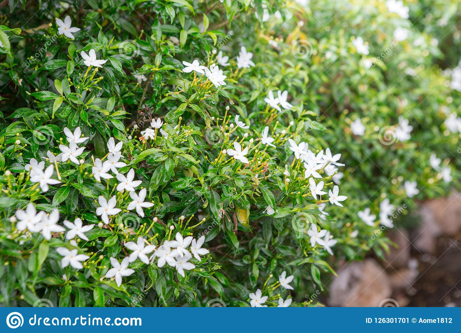 Green shrubs and small white flowers