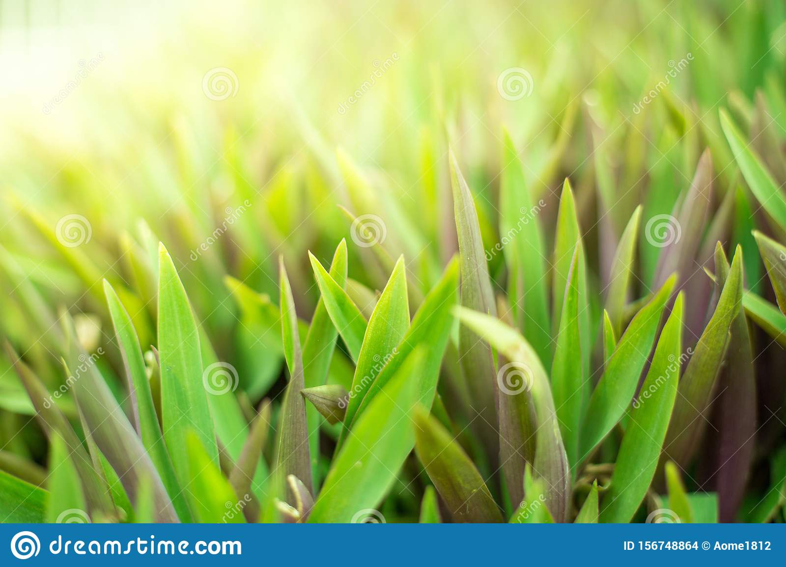 Green shrubs With sunlight on background blurred
