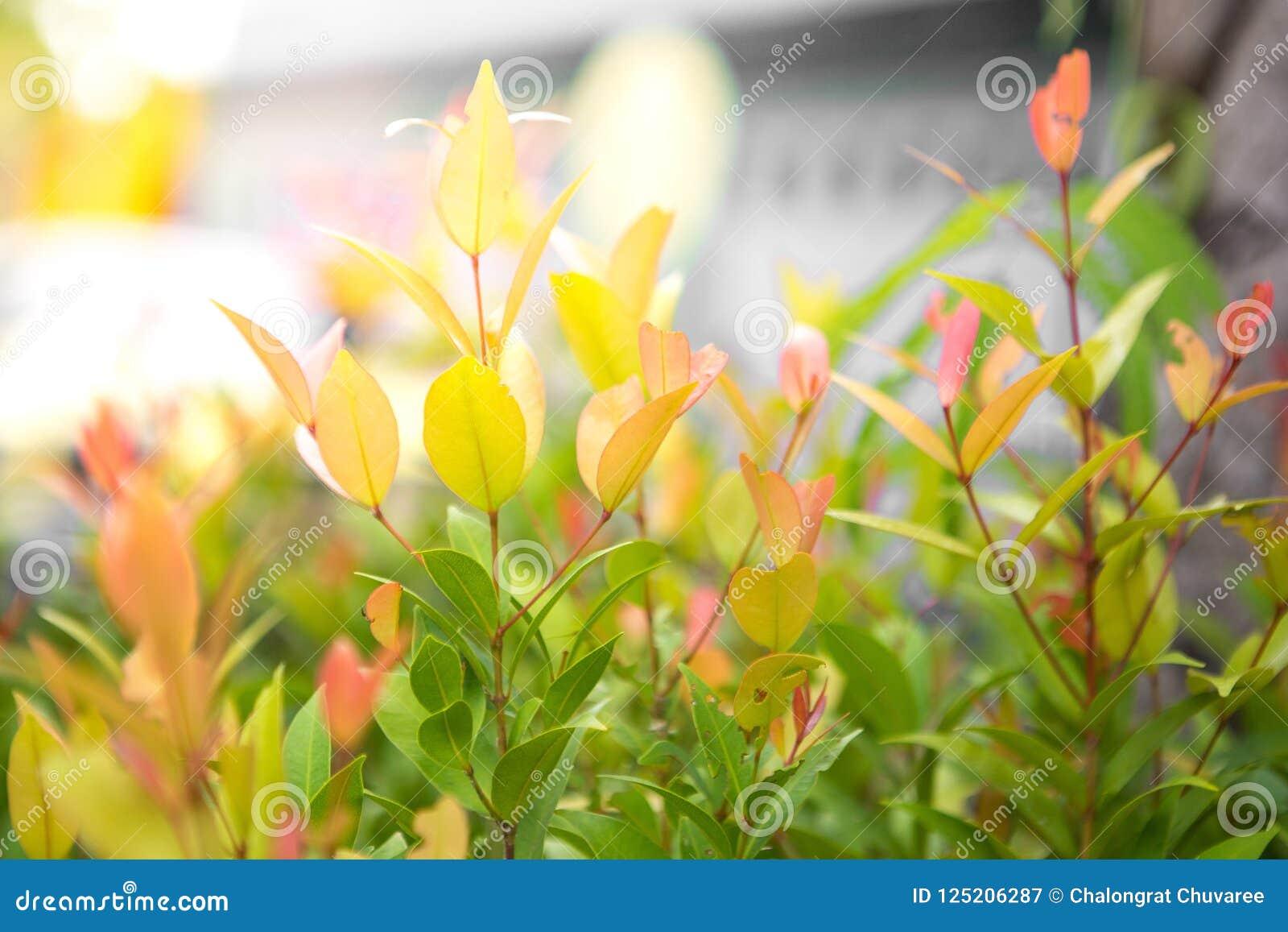 Green shrubs With sunlight