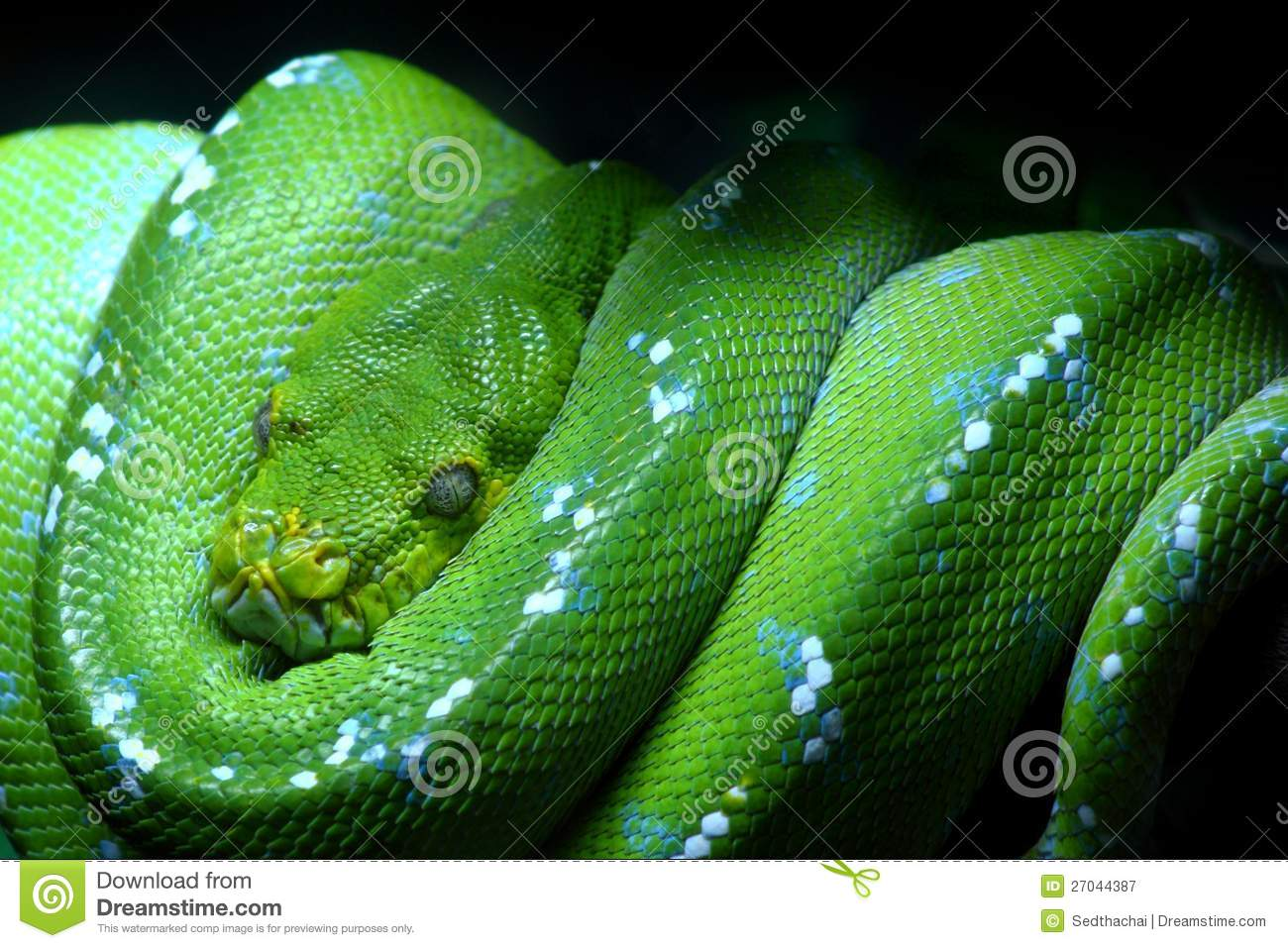 Green Snake Royalty Free Stock Photography Image 27044387