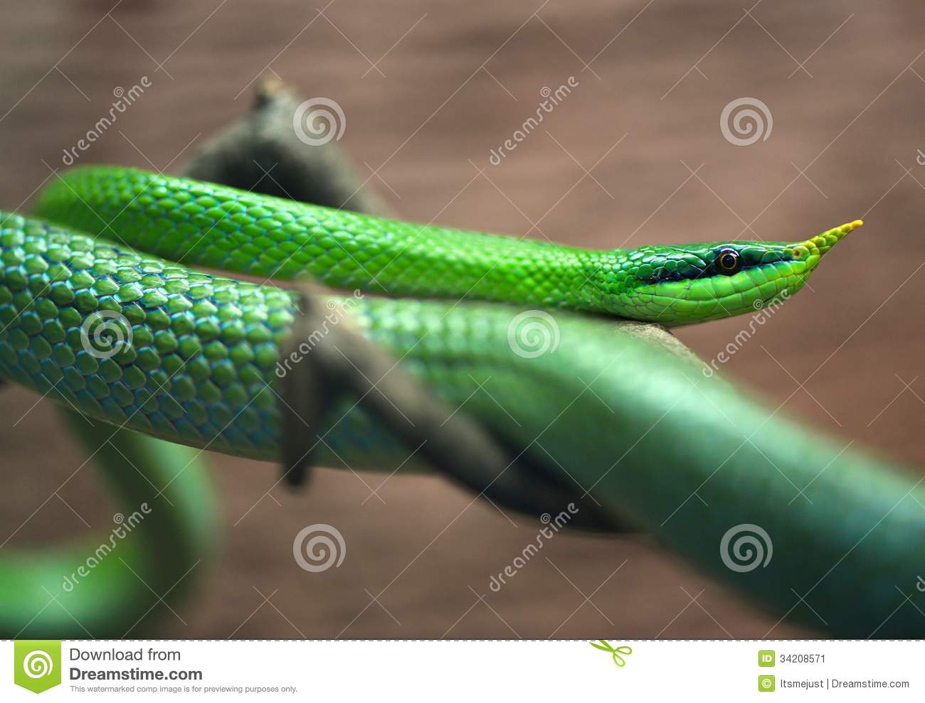 green snakes branches snake - photo #41