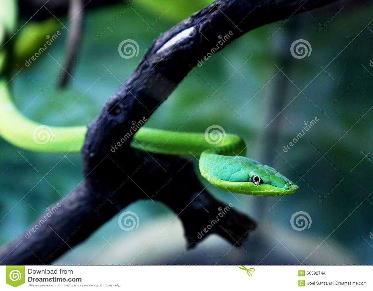 green snakes branches snake - photo #45