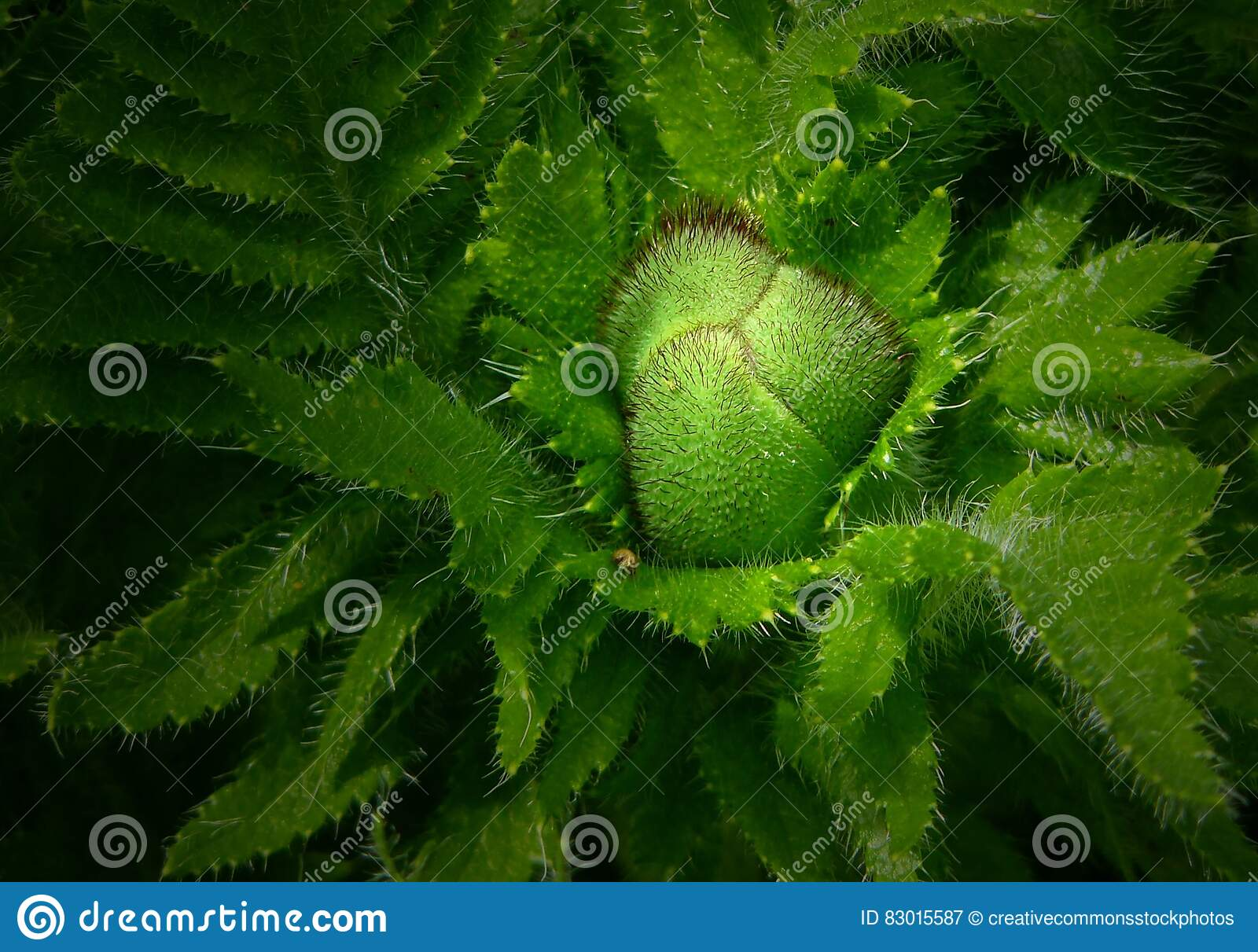 Download Green Spiked Edge Plant Close Up Photo Stock Image - Image of close, green: 83015587