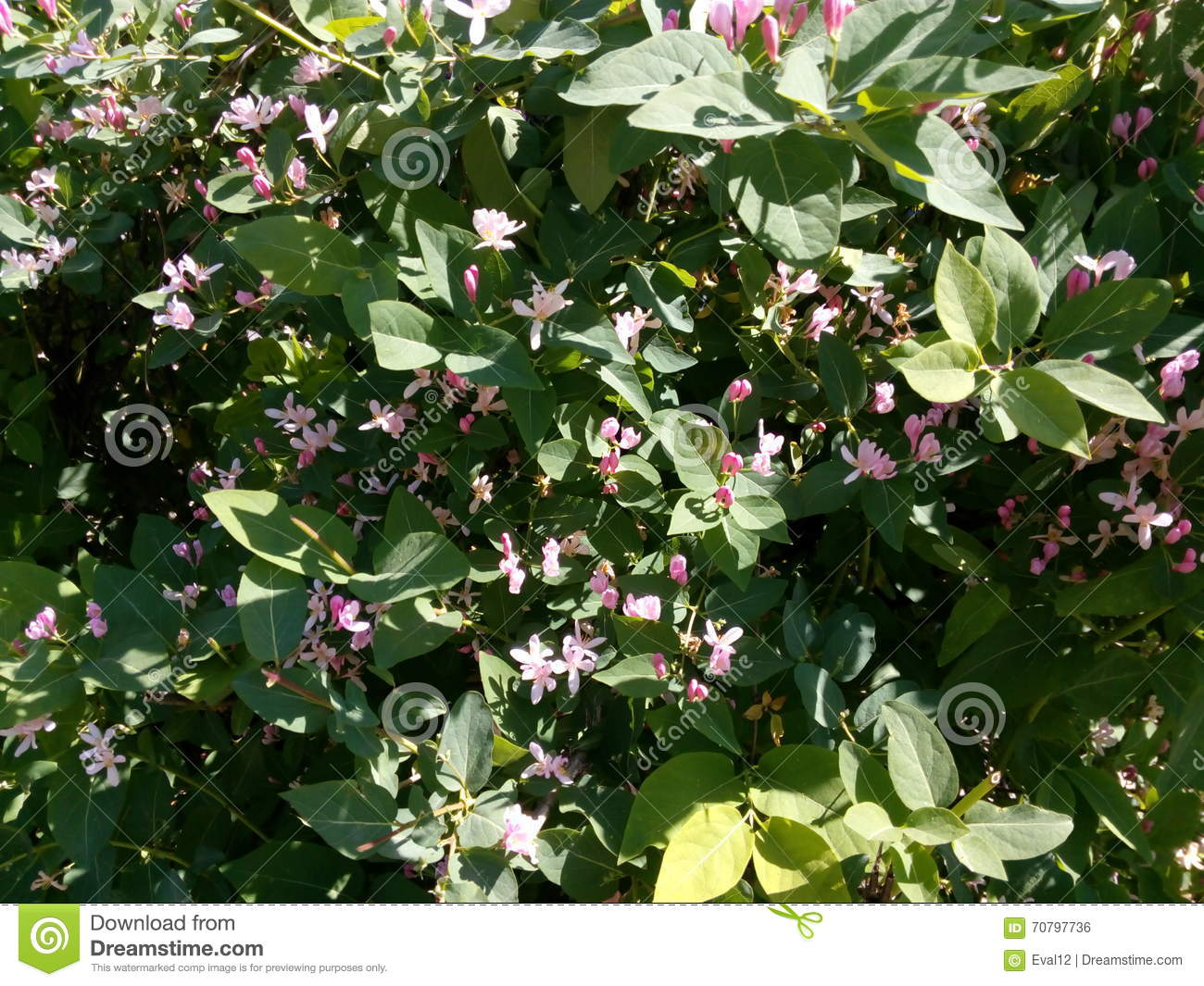 Green spring bush with small pink flowers stock photo image bush flowers green pink small spring dhlflorist Gallery