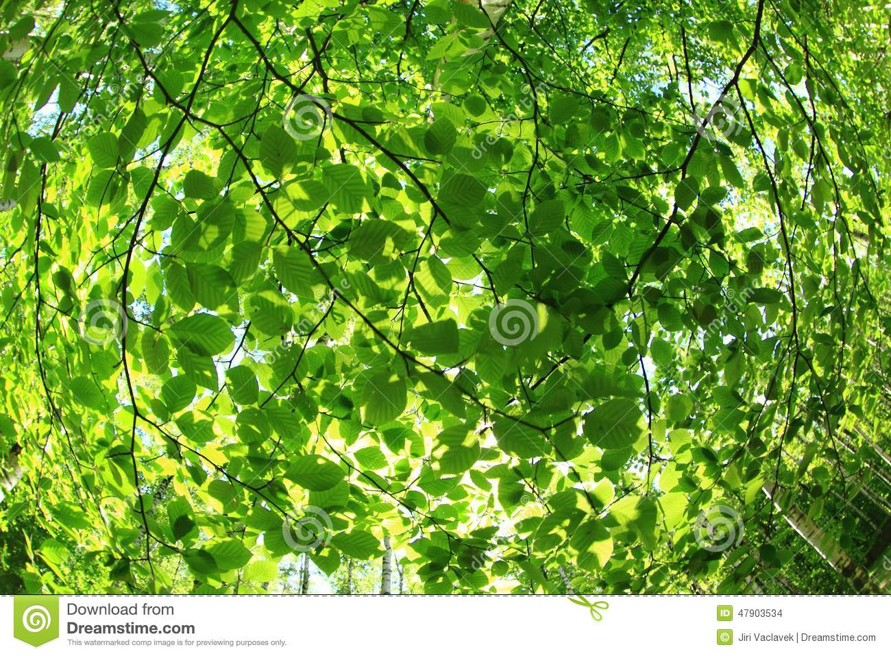 green spring forest background stock photo image 47903534