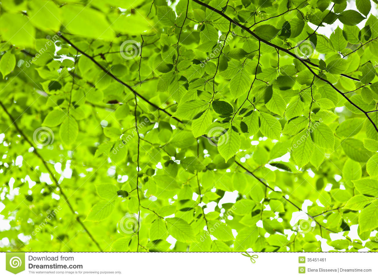 Nature Images 2mb: Green Spring Leaves Stock Image. Image Of Details, Leaves