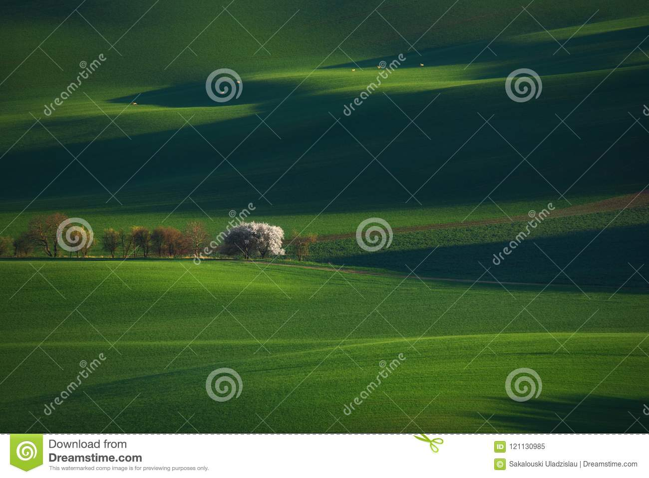 Green Spring Rural Landscape With Blossoming White Apple-Tree And Six Running Roe Deer. European Landscape With White Springtime F