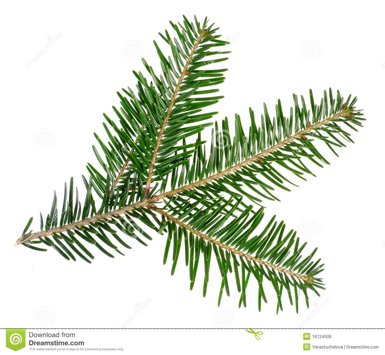 Green spruce twig stock image. Image of closeup, christmas ...