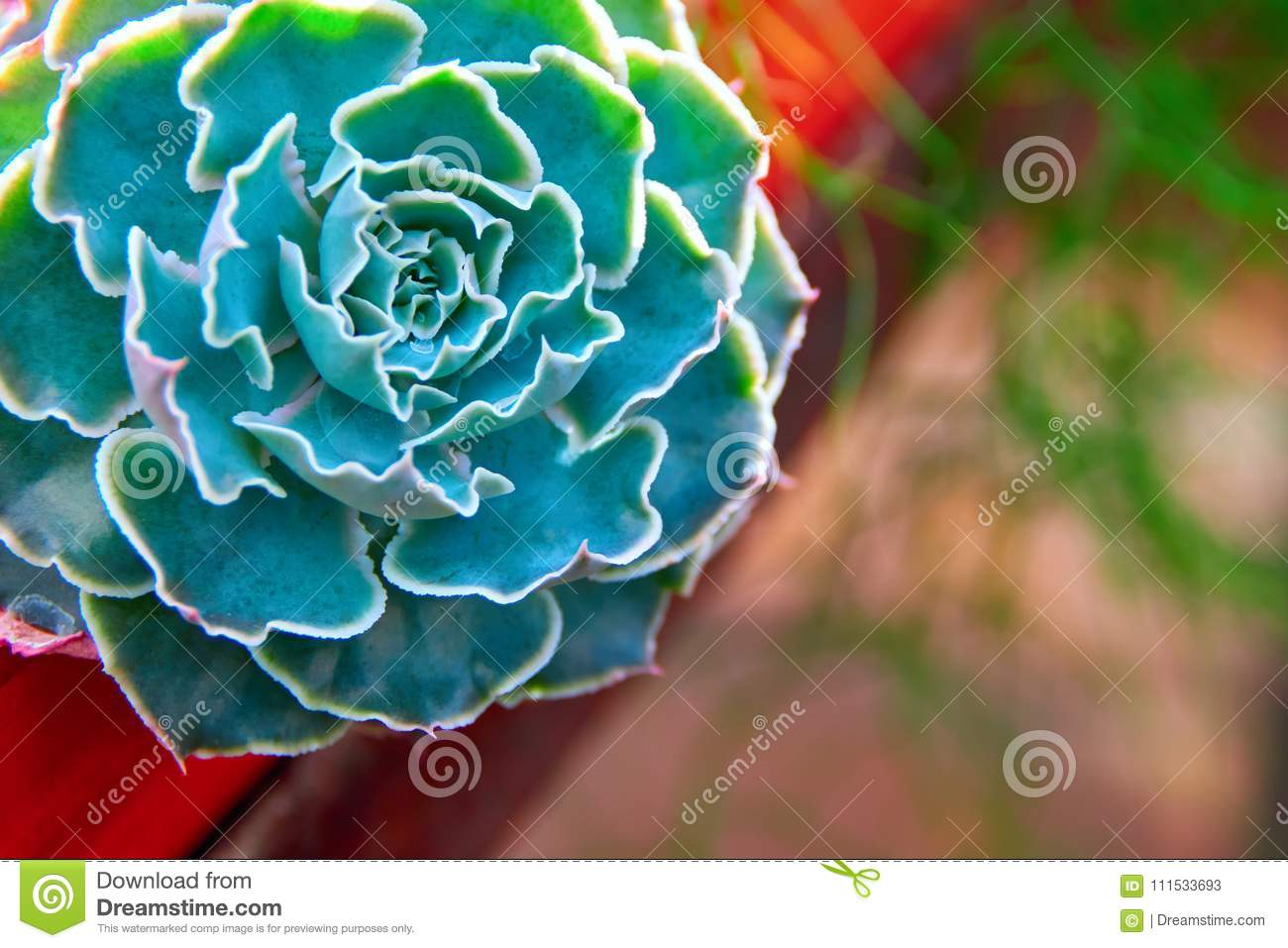 3 985 Succulent Bouquet Photos Free Royalty Free Stock Photos From Dreamstime